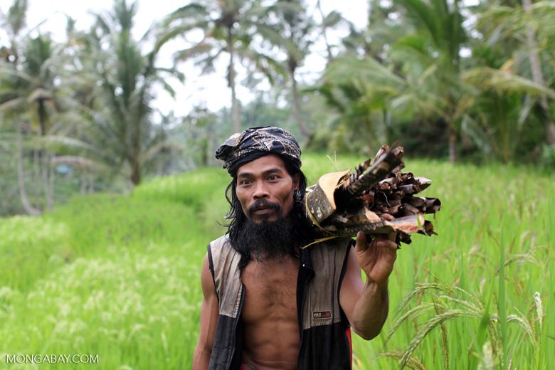 Farmer near Gunung Kawi