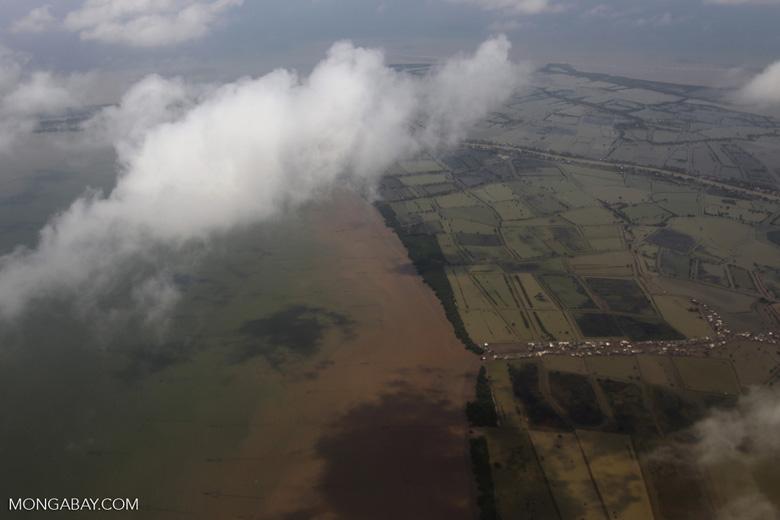Coastal rice paddies near Jakarta