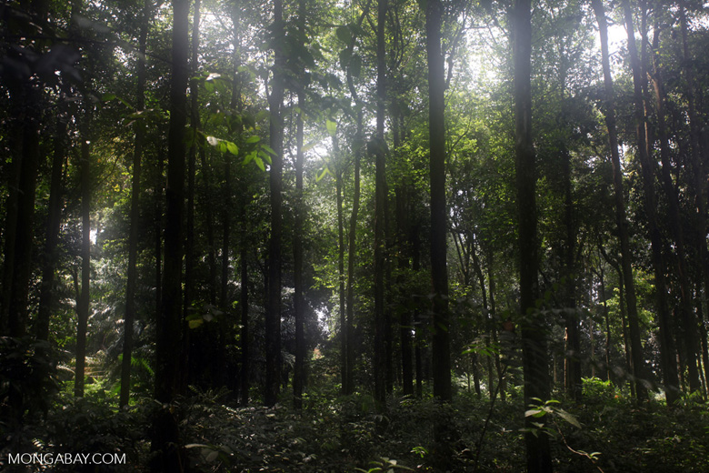 Forest in Bogor near CIFOR [java_0015]