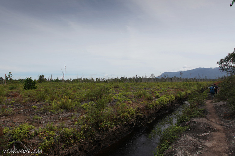 Peatland drainage canal along side a deforested area [kalbar_0007]
