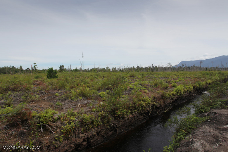 Peatland being drained