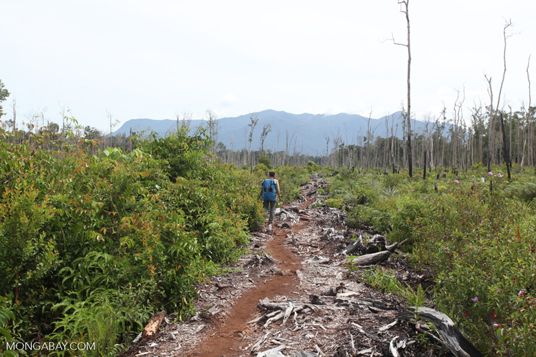 Deforested peat forest in West Kalimantan, Indonesia [kalbar_0029]