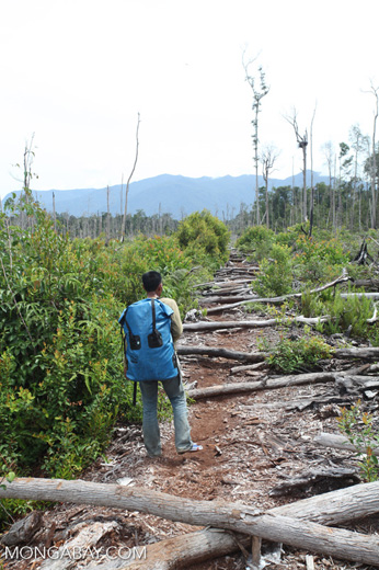 Deforested peat forest in West Kalimantan, Indonesia [kalbar_0027]