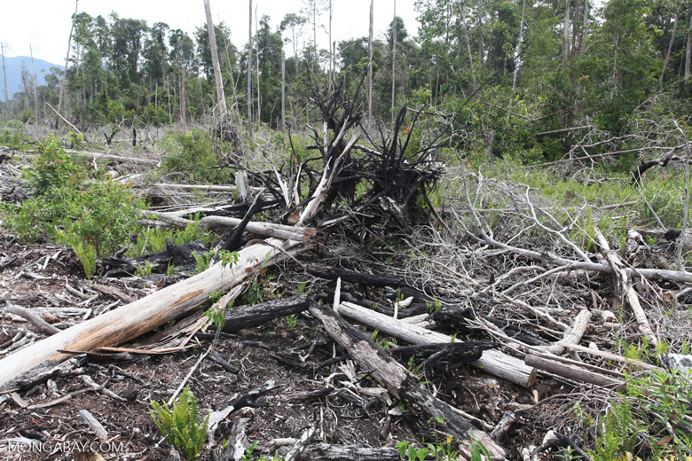 Deforested peat forest in West Kalimantan, Indonesia [kalbar_0038]