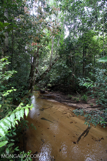 Sand-bottom creek that formers the border of Gunung Palung [kalbar_0104]