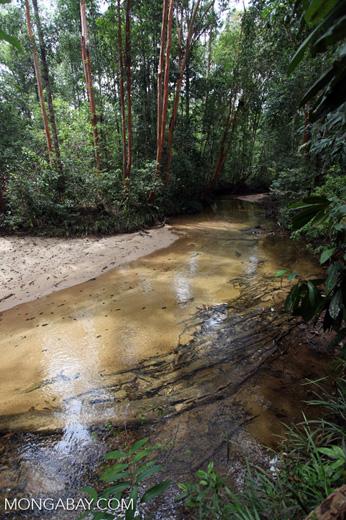 Rainforest creek in Borneo [kalbar_0170]