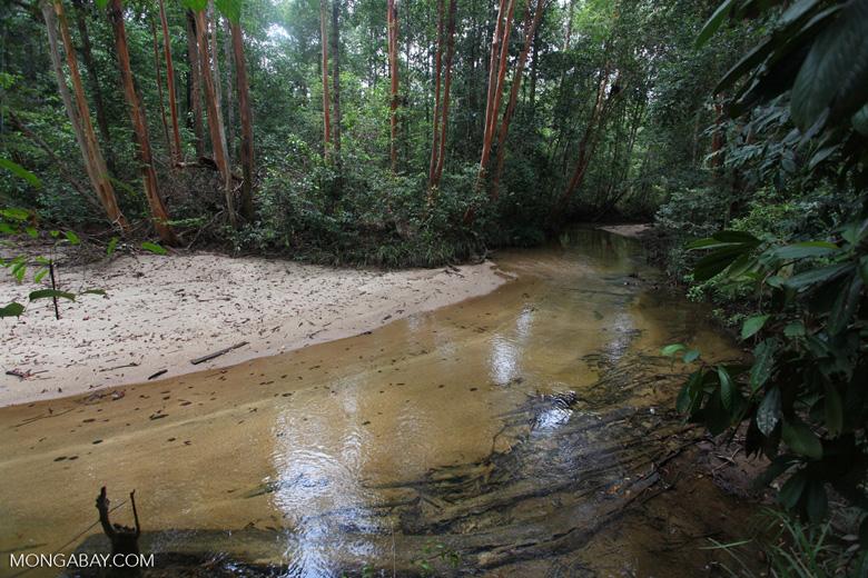 Rainforest creek in Borneo [kalbar_0166]