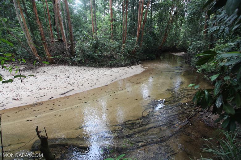 Rainforest creek in Borneo [kalbar_0171]