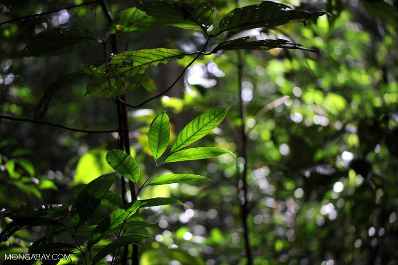 Rain forest leaves [kalbar_0221]