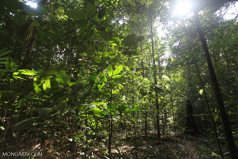 Secondary tropical forest