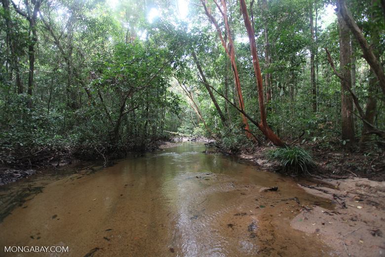 Clear jungle creek [kalbar_0279]