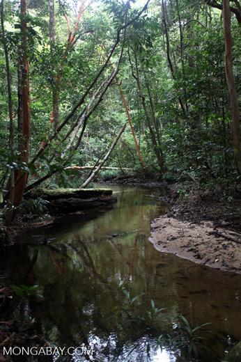 Rainforest stream [kalbar_1856]