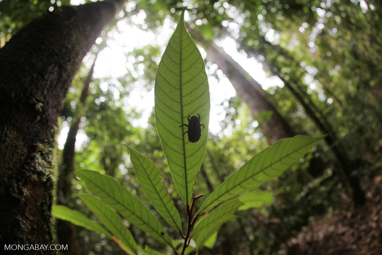 Cicada exoskeleton [kalbar_2075]
