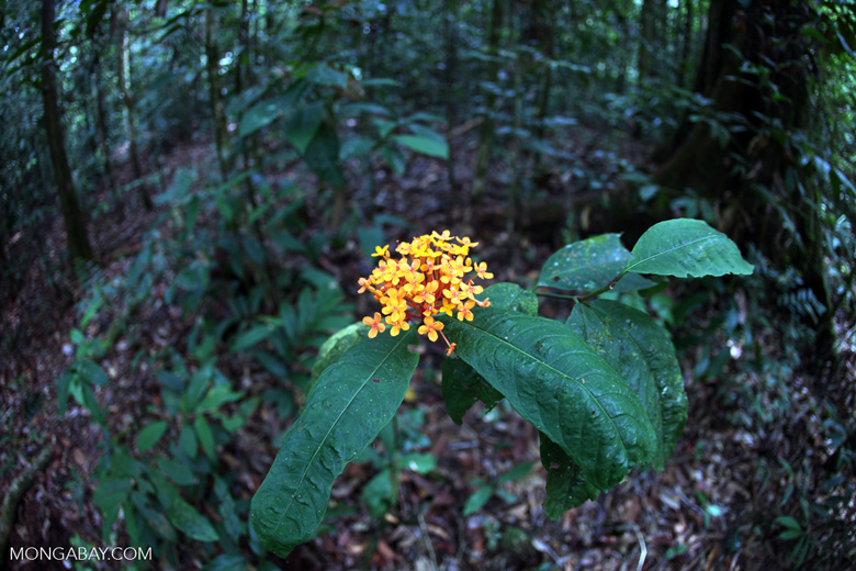 Wild Geraniums [kalbar_0434]