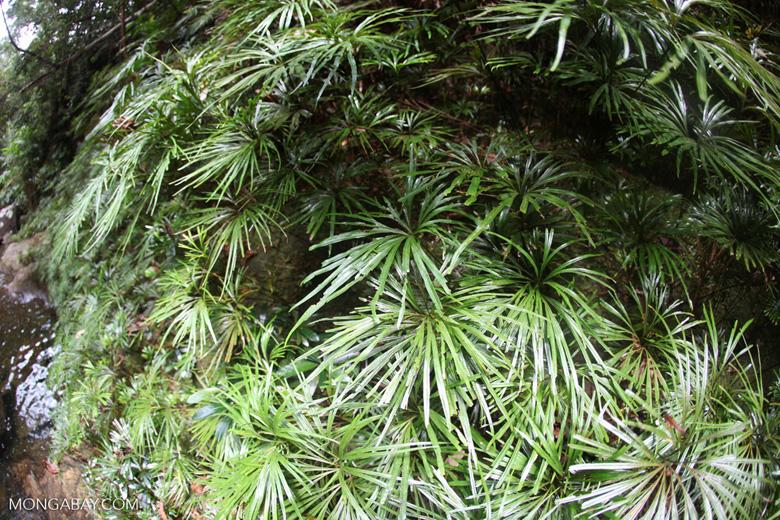 Riparian vegetation [kalbar_0796]
