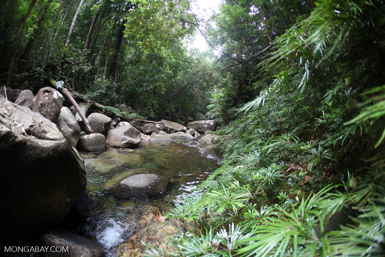 Rainforest stream at Riam Berasap [kalbar_0799]