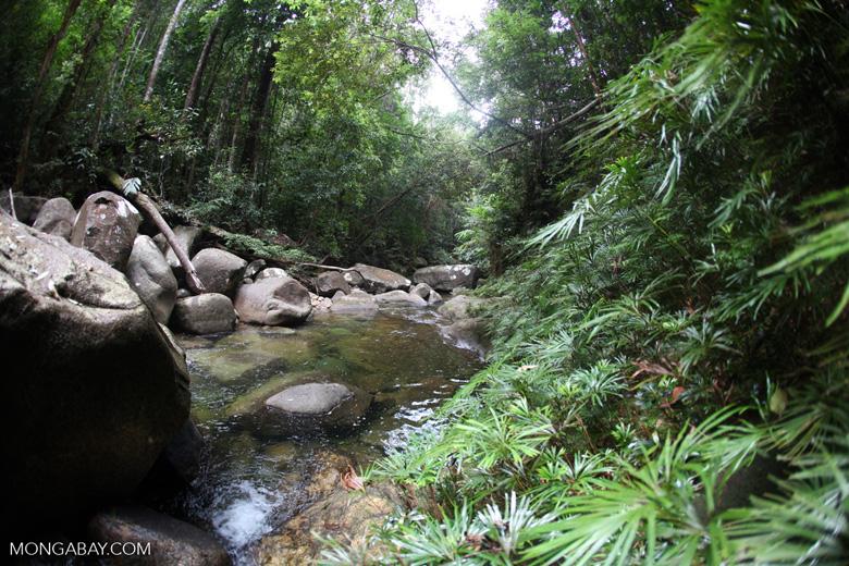 Rainforest stream at Riam Berasap [kalbar_0799]