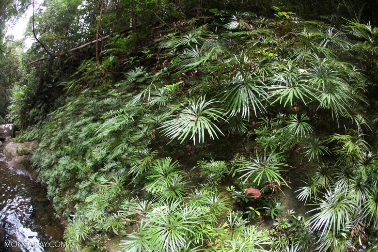 Rainforest stream at Riam Berasap