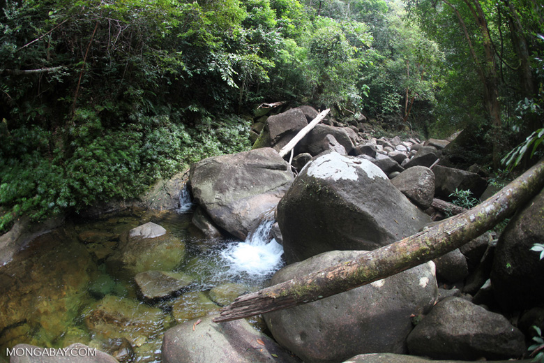 Pool on a rainforest stream at Riam Berasap [kalbar_0801]