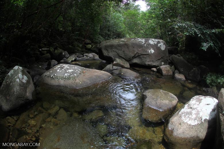 Pool on a rainforest stream at Riam Berasap [kalbar_0818]