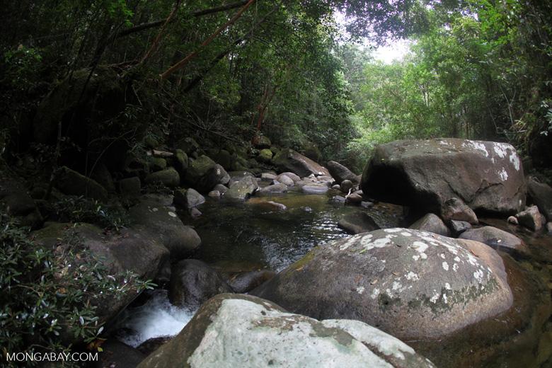Pool on a rainforest stream at Riam Berasap