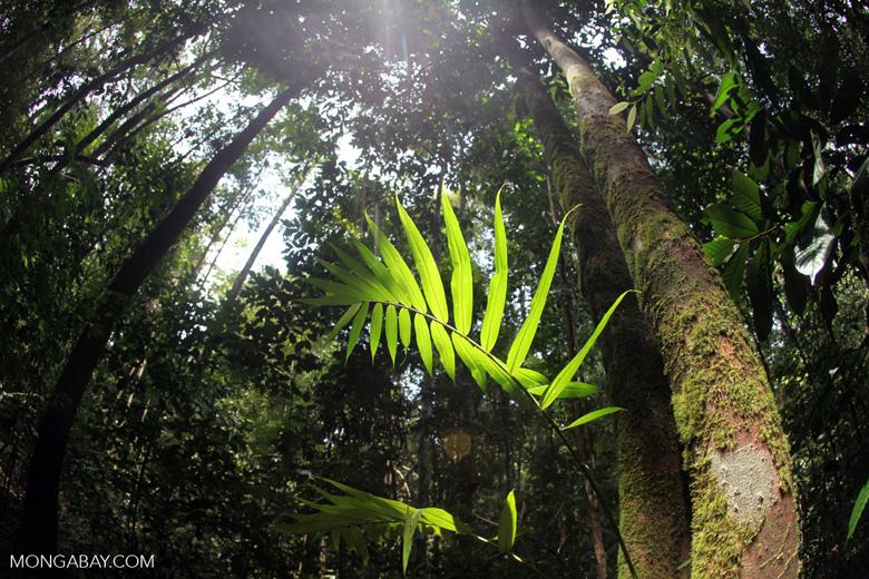Palm illuminated in the sunlight