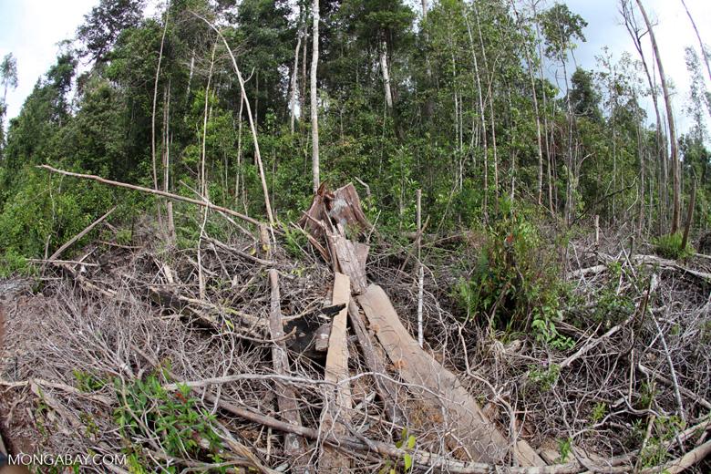 Devastated rainforest landscape in Borneo [kalbar_1113]