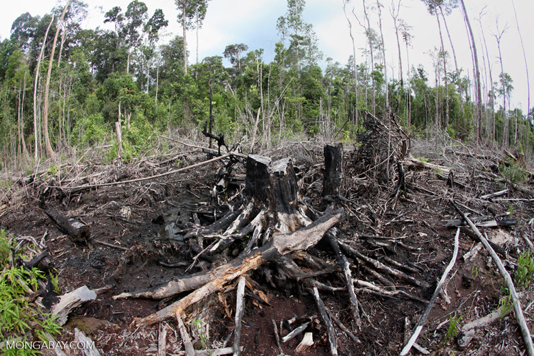Charred remains of a rainforest in Borneo [kalbar_1105]