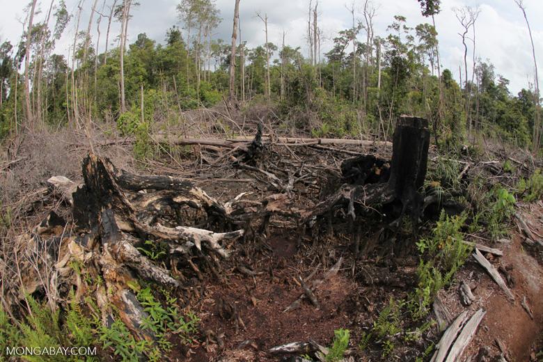 destroyed rainforest landscape in borneo