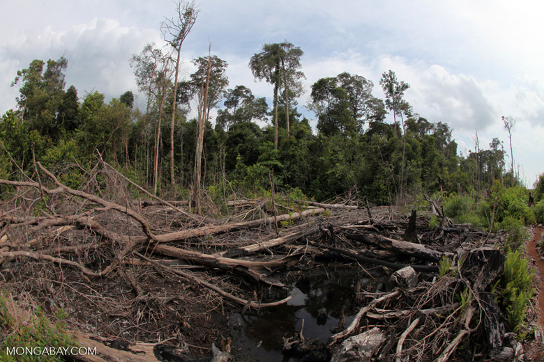 Destroyed peat land in Borneo [kalbar_1138]
