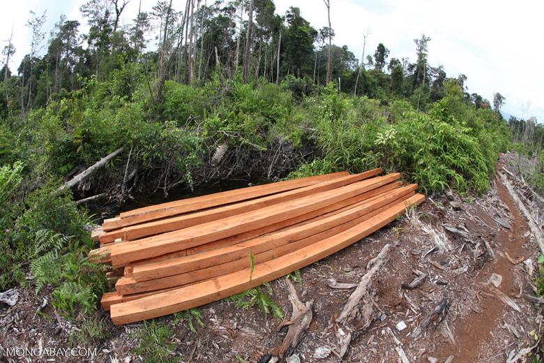 Illegally logged wood cut from a Borneo rainforest [kalbar_1147]
