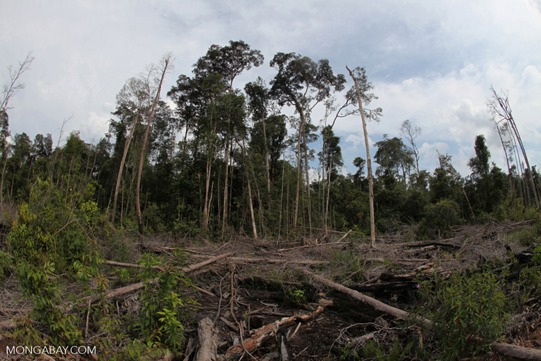 Destroyed peat swamp in Borneo [kalbar_1156]