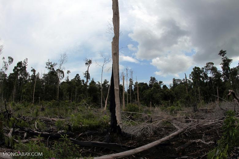 Burned rainforest area in Borneo [kalbar_1154]