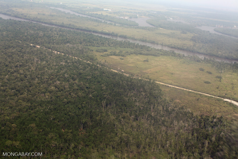Airplane view of forest degradation in Indonesia's West Kalimantan