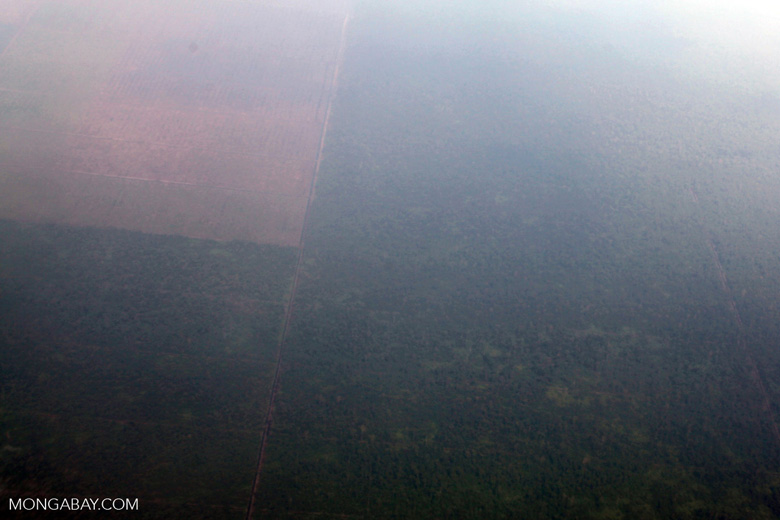 Aerial vew of deforestation in Indonesia