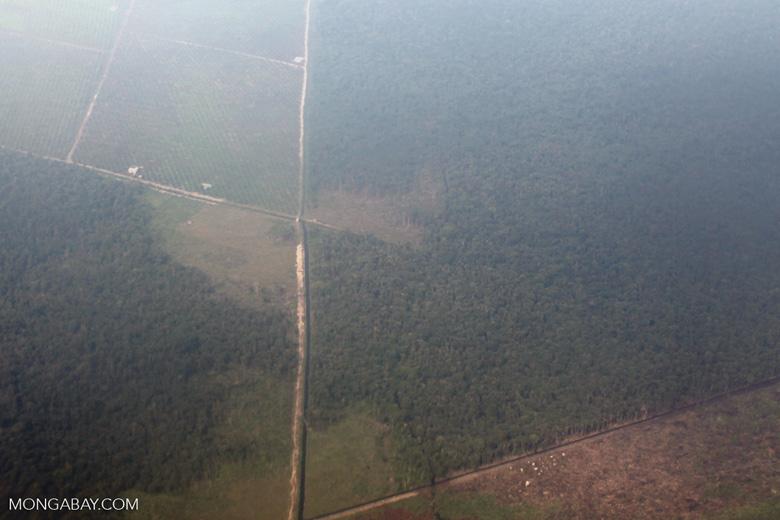 Aerial vew of cleared peatlands in Indonesia's West Kalimantan province [kalbar_1192]