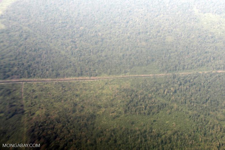 Aerial vew of cleared peatlands in Indonesia's West Kalimantan province [kalbar_1193]