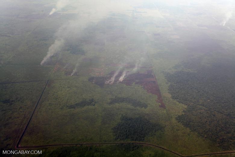 Aerial vew of burning peatlands in Indonesia's West Kalimantan province [kalbar_1201]