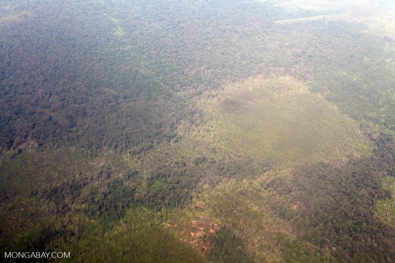 Airplane vew of cleared peatlands in Indonesia's West Kalimantan province [kalbar_1217]