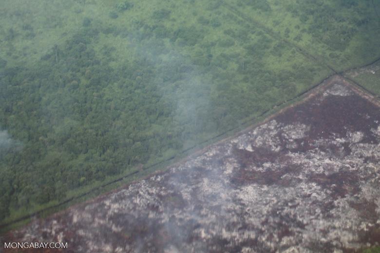 Airplane vew of cleared peatlands in Indonesia's West Kalimantan province [kalbar_1220]