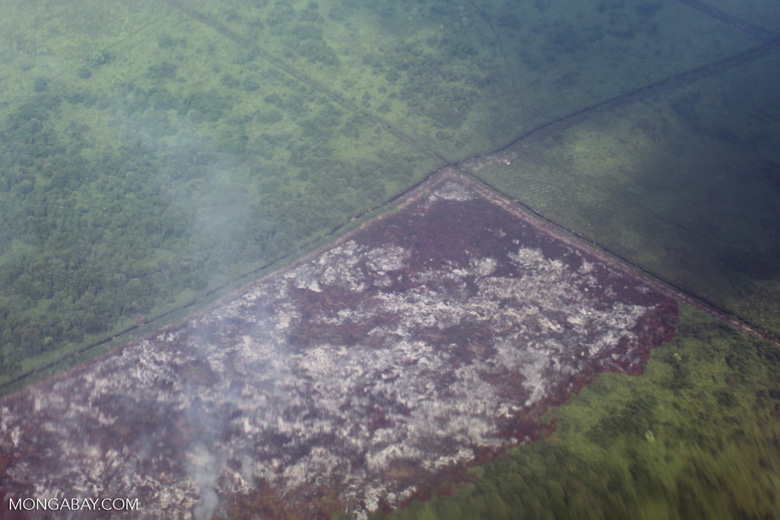 Airplane vew of cleared peatlands in Indonesia's West Kalimantan province [kalbar_1221]