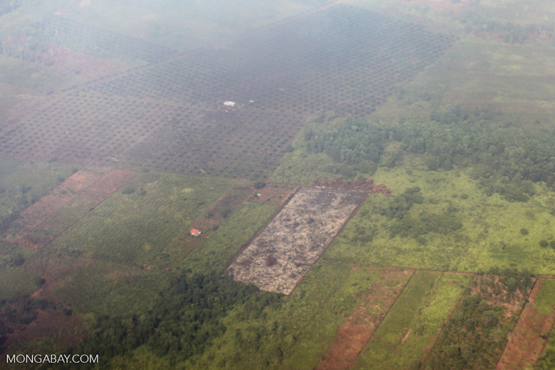 Airplane vew of cleared peatlands in Indonesia's West Kalimantan province [kalbar_1223]