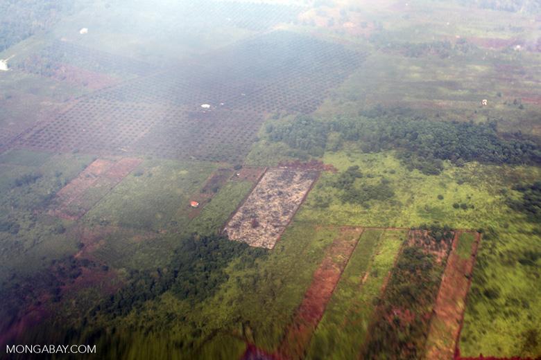 Airplane vew of cleared peatlands in Indonesia's West Kalimantan province [kalbar_1224]