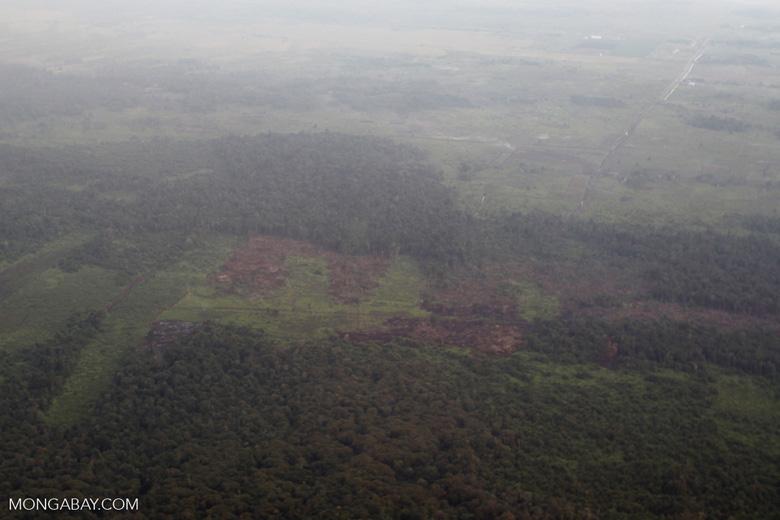 Forest degradation in Indonesian Borneo [kalbar_1232]