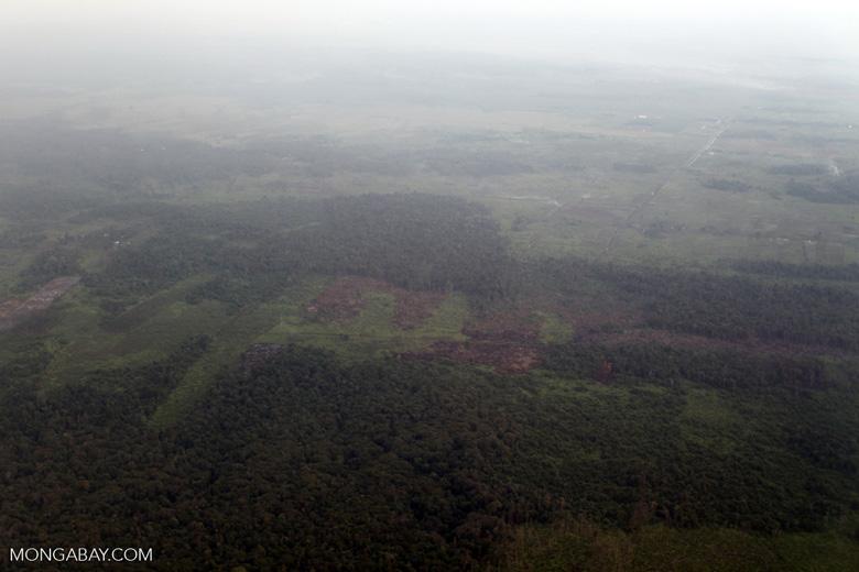 Forest degradation in Indonesian Borneo [kalbar_1227]