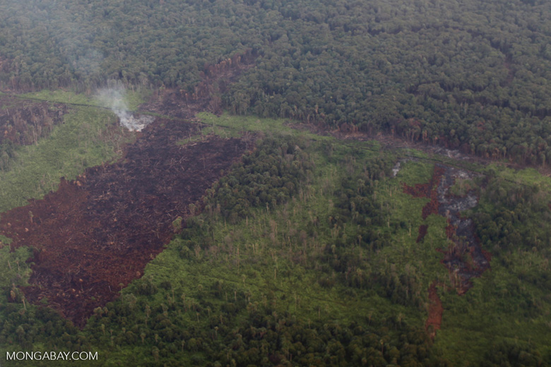 Aerial vew of burning peatlands and forest in Indonesian Borneo [kalbar_1250]