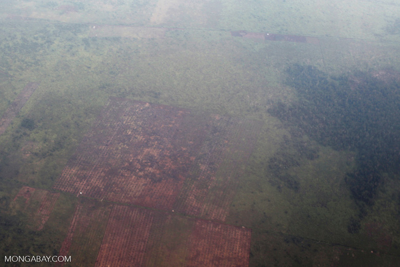 Forest degradation in Indonesian Borneo