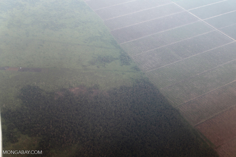 Aerial view of forest and land cleared for oil palm plantations [kalbar_1265]