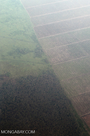 Aerial view of forest and land cleared for oil palm plantations [kalbar_1273]