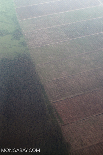 Aerial view of forest and land cleared for oil palm plantations [kalbar_1275]